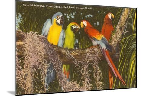 Macaws, Miami, Florida--Mounted Art Print