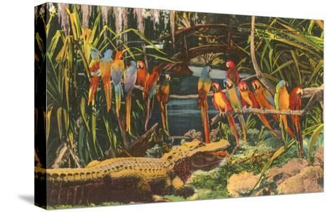 Macaws and Alligator, Florida--Stretched Canvas Print