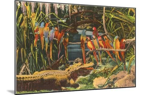Macaws and Alligator, Florida--Mounted Art Print