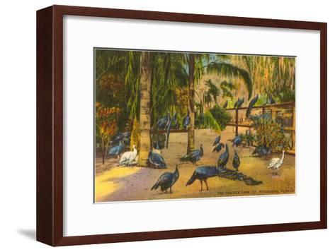 Peacocks, St. Petersburg, Florida--Framed Art Print