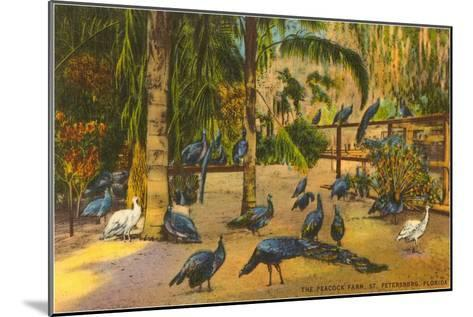 Peacocks, St. Petersburg, Florida--Mounted Art Print