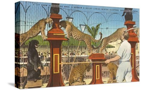 Circus Leopards, Panther, Lion, Sarasota, Florida--Stretched Canvas Print