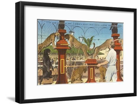 Circus Leopards, Panther, Lion, Sarasota, Florida--Framed Art Print