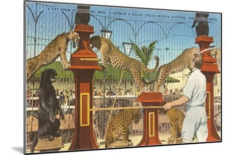 Circus Leopards, Panther, Lion, Sarasota, Florida--Mounted Art Print