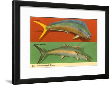 Fish Native to Florida Waters--Framed Art Print