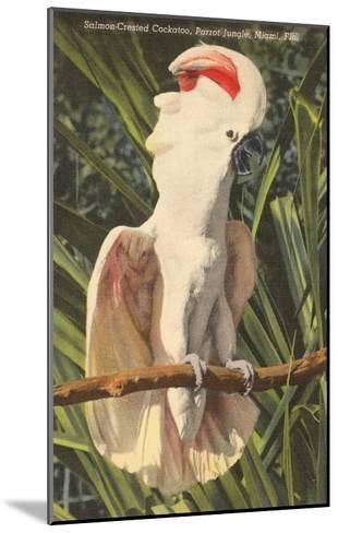 Salmon-Crested Cockatoo, Florida--Mounted Art Print