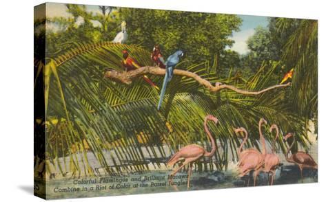 Macaws, Flamingos, Cockatoo, Florida--Stretched Canvas Print