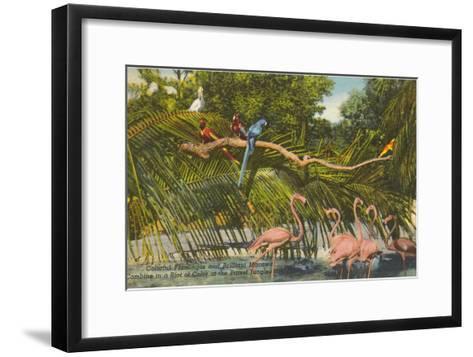 Macaws, Flamingos, Cockatoo, Florida--Framed Art Print