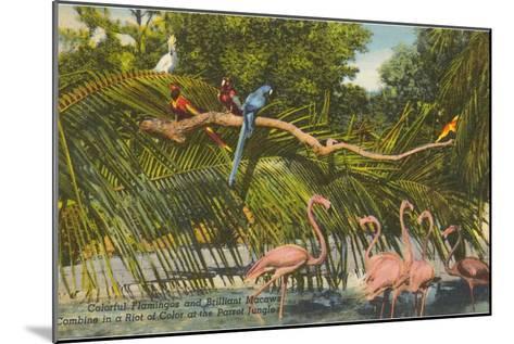 Macaws, Flamingos, Cockatoo, Florida--Mounted Art Print