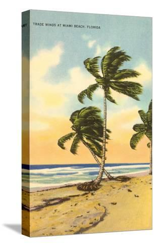 Palm Trees, Miami Beach, Florida--Stretched Canvas Print