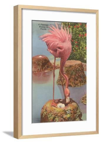 Flamingo Nesting in Florida--Framed Art Print
