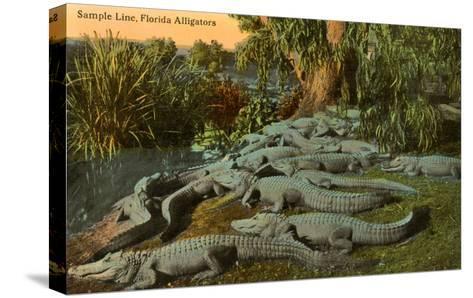 Florida Alligators--Stretched Canvas Print