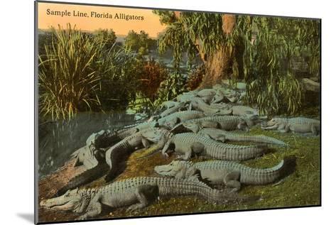 Florida Alligators--Mounted Art Print
