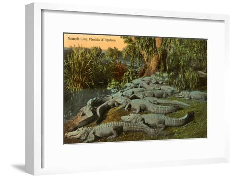 Florida Alligators--Framed Art Print