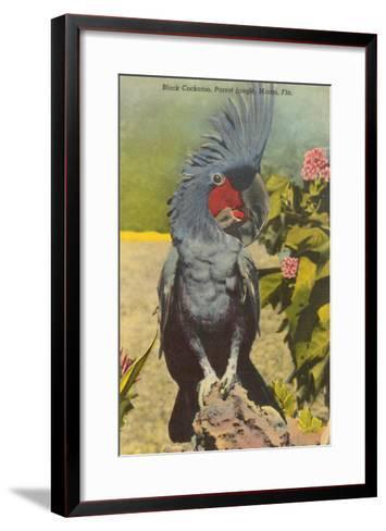 Black Cockatoo, Miami, Florida--Framed Art Print