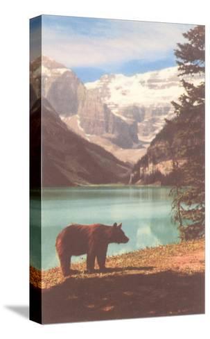 Black Bear near Lake Louise, Alberta, Canada--Stretched Canvas Print