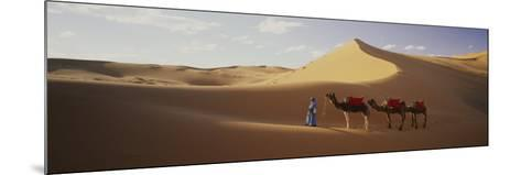 Camels in Desert Morocco Africa--Mounted Photographic Print
