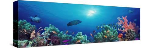 School of Fish Swimming Near a Reef, Indo-Pacific Ocean--Stretched Canvas Print
