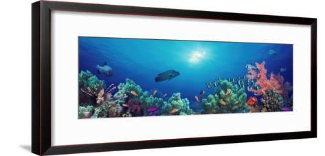 School of Fish Swimming Near a Reef, Indo-Pacific Ocean--Framed Art Print