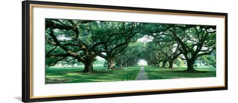 Louisiana, New Orleans, Brick Path Through Alley of Oak Trees--Framed Art Print