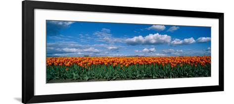 Clouds over a Tulip Field, Skagit Valley, Washington State, USA--Framed Art Print