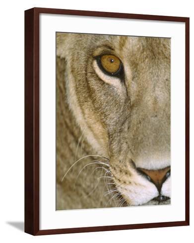 Lioness Close-Up Tanzania Africa--Framed Art Print