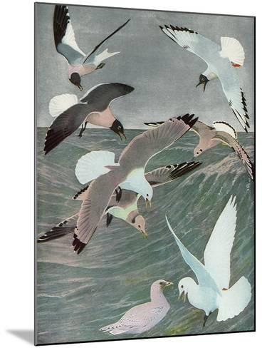 Sea Birds, 1913-Louis Agassiz Fuertes-Mounted Giclee Print