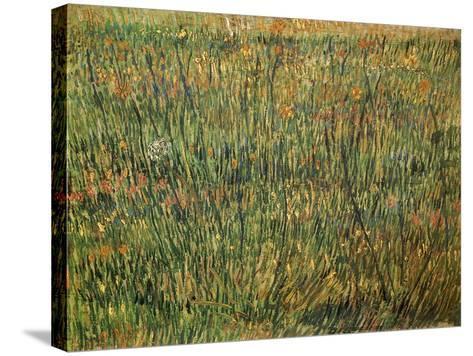 Pasture in Bloom, 1887-Vincent van Gogh-Stretched Canvas Print