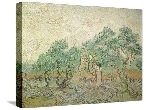 The Olive Orchard, 1889-Vincent van Gogh-Stretched Canvas Print
