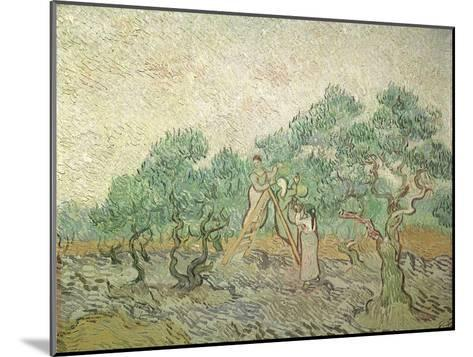 The Olive Orchard, 1889-Vincent van Gogh-Mounted Giclee Print
