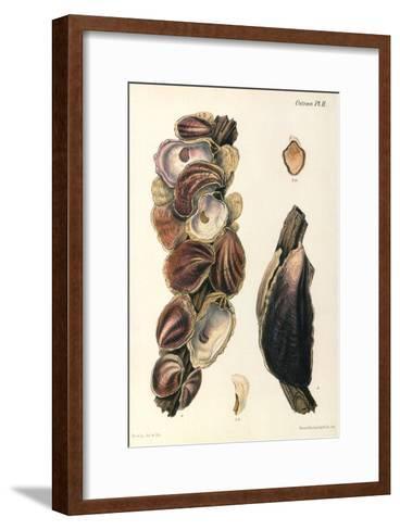 Oyster Shells, 1870--Framed Art Print