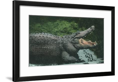 Alligator with Open Jaws--Framed Art Print