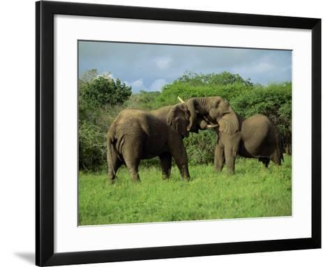 Two African Elephants Greeting, Kruger National Park, South Africa, Africa-Paul Allen-Framed Art Print