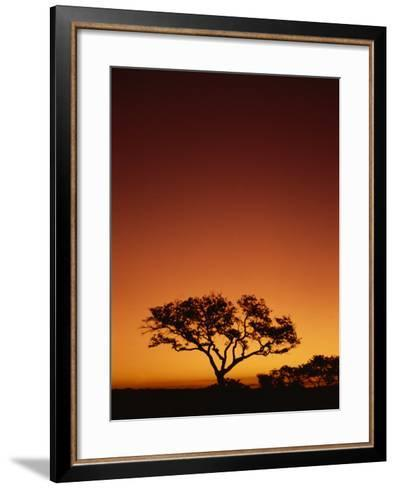 Single Tree Silhouetted Against a Red Sunset Sky in the Evening, Kruger National Park, South Africa-Paul Allen-Framed Art Print