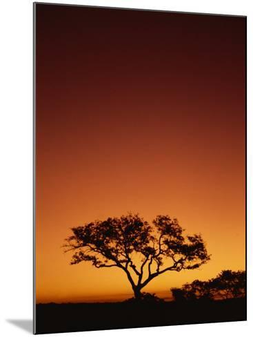 Single Tree Silhouetted Against a Red Sunset Sky in the Evening, Kruger National Park, South Africa-Paul Allen-Mounted Photographic Print