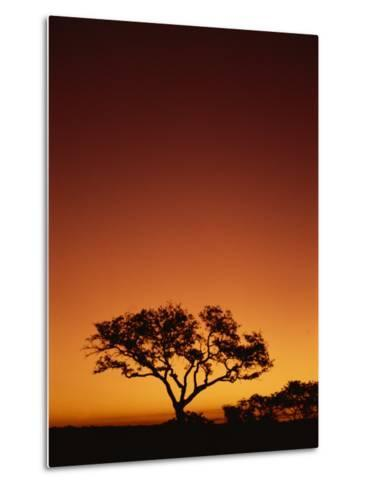 Single Tree Silhouetted Against a Red Sunset Sky in the Evening, Kruger National Park, South Africa-Paul Allen-Metal Print
