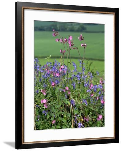 Tangle of Campions and Bluebells, Wild Flowers in Spring-Michael Black-Framed Art Print