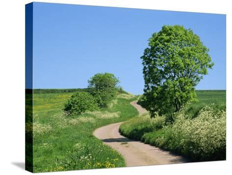 Empty Road Winding Through Countryside, Devon, England, United Kingdom, Europe-Michael Black-Stretched Canvas Print
