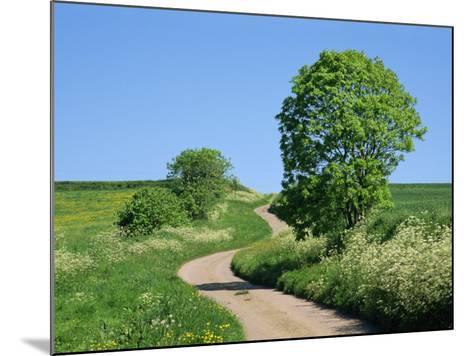 Empty Road Winding Through Countryside, Devon, England, United Kingdom, Europe-Michael Black-Mounted Photographic Print
