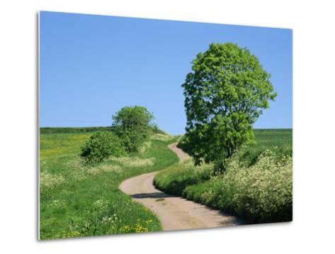 Empty Road Winding Through Countryside, Devon, England, United Kingdom, Europe-Michael Black-Metal Print