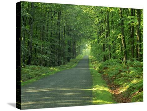 Straight Empty Rural Road Through Woodland Trees, Forest of Nevers, Burgundy, France, Europe-Michael Busselle-Stretched Canvas Print