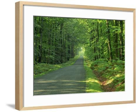 Straight Empty Rural Road Through Woodland Trees, Forest of Nevers, Burgundy, France, Europe-Michael Busselle-Framed Art Print