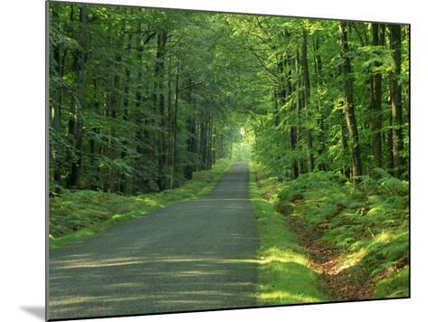 Straight Empty Rural Road Through Woodland Trees, Forest of Nevers, Burgundy, France, Europe-Michael Busselle-Mounted Photographic Print
