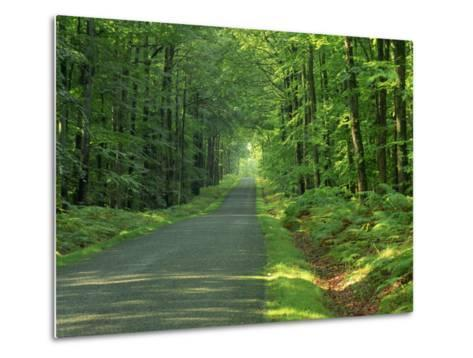 Straight Empty Rural Road Through Woodland Trees, Forest of Nevers, Burgundy, France, Europe-Michael Busselle-Metal Print