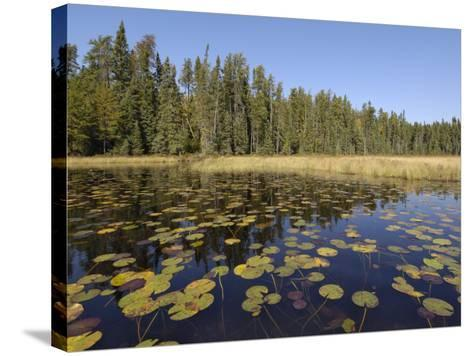Frost River, Boundary Waters Canoe Area Wilderness, Superior National Forest, Minnesota, USA-Gary Cook-Stretched Canvas Print