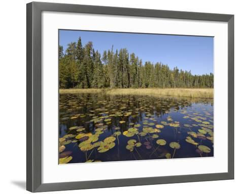 Frost River, Boundary Waters Canoe Area Wilderness, Superior National Forest, Minnesota, USA-Gary Cook-Framed Art Print