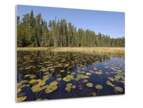 Frost River, Boundary Waters Canoe Area Wilderness, Superior National Forest, Minnesota, USA-Gary Cook-Metal Print