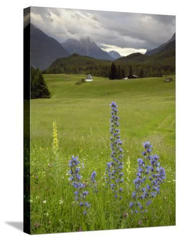 Alpine Meadow, Near Kofels, Umhausen, Otztal Valley, Tyrol, Austria, Europe-Gary Cook-Stretched Canvas Print