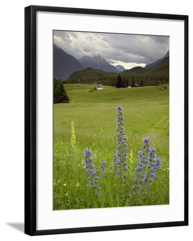 Alpine Meadow, Near Kofels, Umhausen, Otztal Valley, Tyrol, Austria, Europe-Gary Cook-Framed Art Print