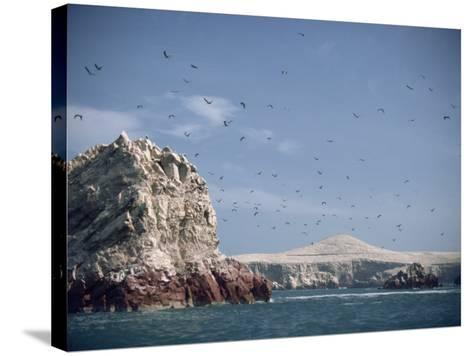 Flock of Birds Above the Coast Near Pisco, Peru, South America-Rob Cousins-Stretched Canvas Print